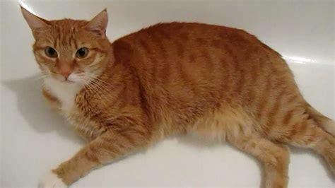 Search For Katz die katze in der badewanne