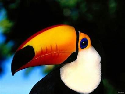 Exotic Birds Animals Bird Zoo Pet Pets