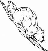 Beaver Coloring Pages Animals sketch template