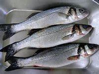 cuisiner le bar les poissons les plus courants en cuisine