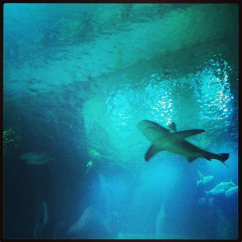 a la rencontre des requins 224 l aquarium de