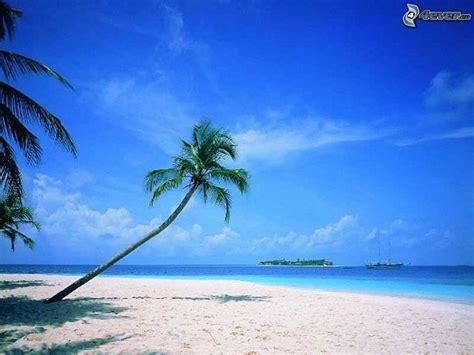 si鑒e de plage palmier sur la plage de