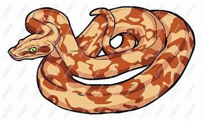 Boa Constrictor Clipart Clip Vector Snake Cartoon