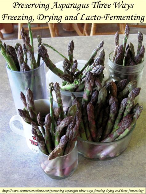 how to preserve asparagus preserving asparagus three ways freezing drying lacto fermenting