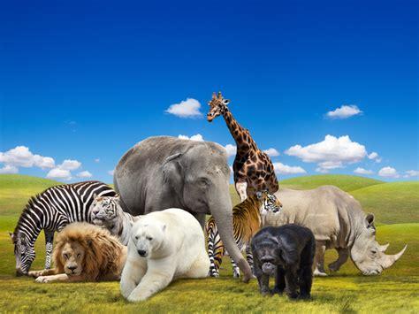 texas zoos five