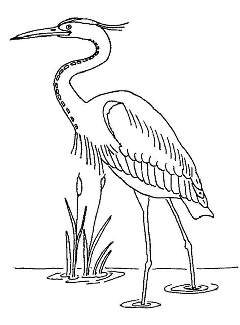heron coloring pages    print