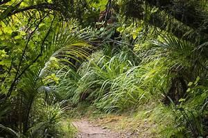 Comment Affuter Un Foret : jardin sous bois quelles plantes ooreka ~ Dailycaller-alerts.com Idées de Décoration
