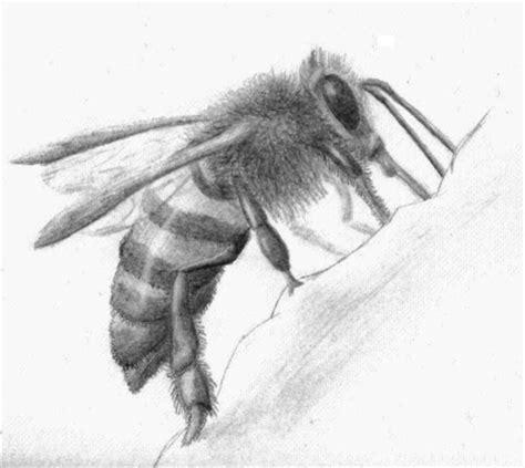 biene insekten biene zeichnungen tiere von   bei