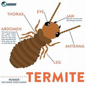 Tick Pest Types Diagram