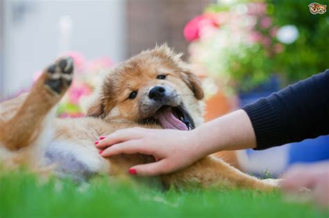 The Importance Of Companionship And Quality Time For Dogs Petshomes