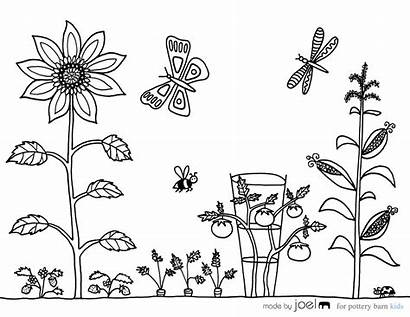 Coloring Vegetable Garden Sheet Pages Sheets Drawing