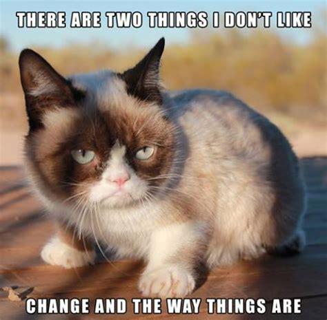 Grumpy Cat Still Grumpy