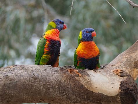 most colorful birds 14 of the most colorful birds in the entire world nature