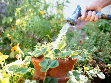 dzivei.lv - Kā izglābt dārzu sausajā un karstajā laikā ...