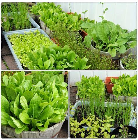 บ้านผักสวนครัว แค่มีรั้วก็กินได้: วิธีการปลูกผักสวนครัวใน ...