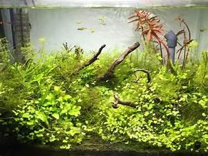 Aquarium Gestaltung Bilder : aquarium einrichten dein weg zum perfekten becken ~ Lizthompson.info Haus und Dekorationen