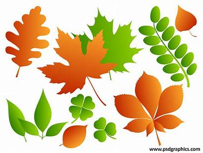 Leaves Vector Psd Ai Psdgraphics 1mb Graphics