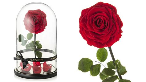 'beauty And The Beast' Rose In Dome For Sale