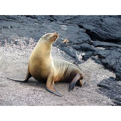 Galapagos: Sea lions oh my ….Traveling Light