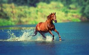 1080x1920 Running Horse In Water Iphone 7,6s,6 Plus, Pixel ...