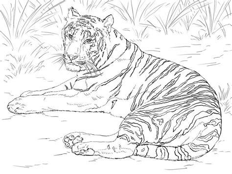 tiger ausmalbilder fuer erwachsene kostenlos zum ausdrucken