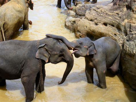 elephant   stock     stock