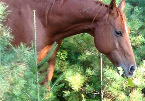 riding horseback ranch adirondack adventures lake ny george