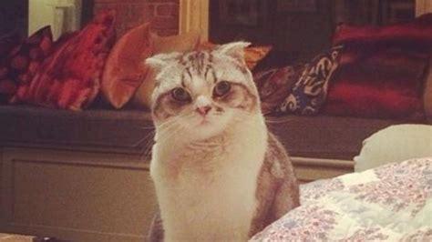 taylor swift names  cat  svu character video