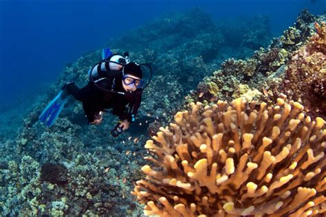 Best Place To Scuba Dive by Best Places To Scuba Dive In The Caribbean Caribbean