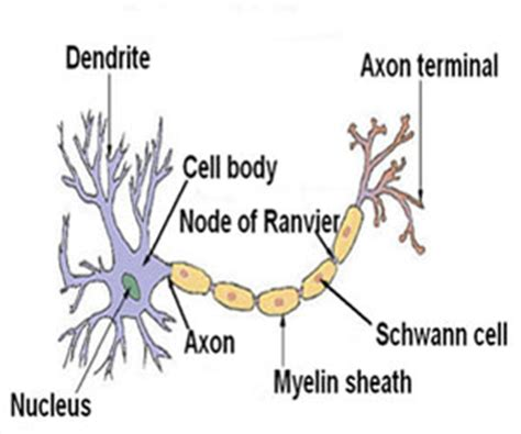 how habits are formed in the brain habit formation is enabled by gateway to brain cells