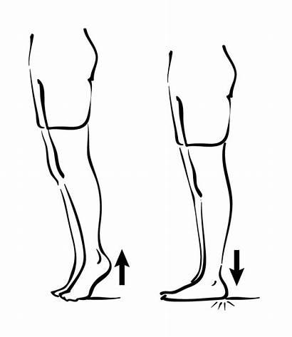 Heel Raises Calves Clipart Foot Pain Exercise