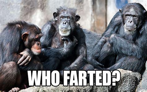 Chimp Meme - animal memes hilarious animal pictures with captions seaworld 174 kids