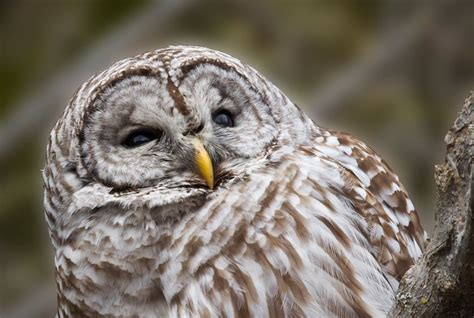 Who Said That? 8 Owls You Might Hear At Night