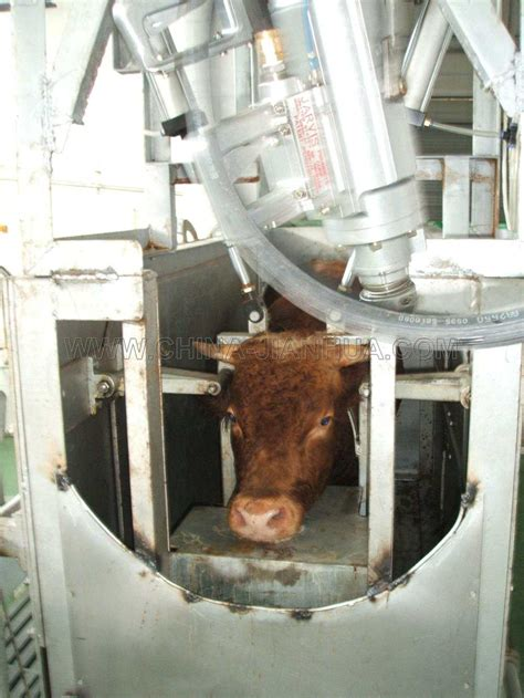 Complete Automatic Cattle Slaughter Line Buy Cattle