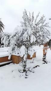 Olivenbaum Pflege Im Topf : olivenbaum pflegen leicht gemacht tipps ber olivenb ume ~ Buech-reservation.com Haus und Dekorationen