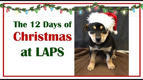 The 12 Days Of Christmas At The Langley Animal Shelter Youtube