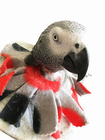 Bird Collar Feather Soft Parrot Plucking Collars