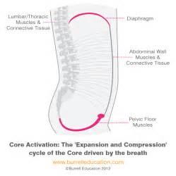 understanding pelvic floor movementpelvic health and