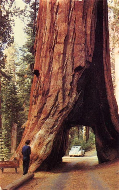 Interesting Yosemite National Park Facts
