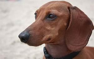 dachshund 7XPJ9ROQZo2Mkj3XcZokBNqgxb9usRmXsxtmSQgMtac