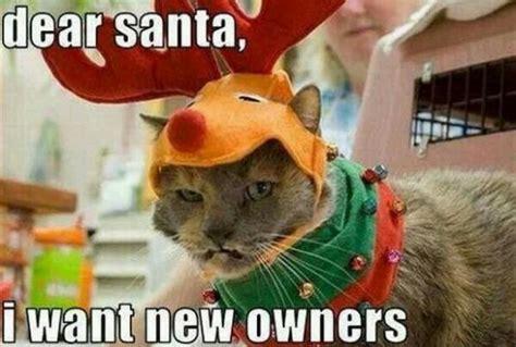 Christmas Animal Meme - 15 funny christmas cats photos kitty bloger