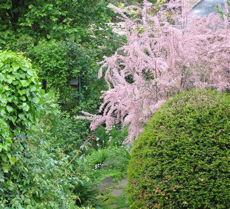Garten Norden Pflanzen by Tamariske Erst Denken Dann Pflanzen Essen Nord