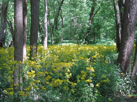 Friesner Herbarium Blog About Indiana Plants Timely Seasonal Information On Wild Plants