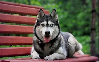 Animal Dog Heterochromia Animals Dogs Eye Bench