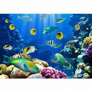 Tiere Für Aquarium : fototapete unterwasserwelt ~ Lizthompson.info Haus und Dekorationen