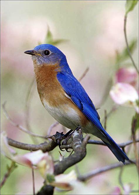bluebird smell like dirt