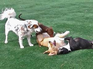 fun and safe dog daycare in mooresville nc pampered pets inn With dog daycare charlotte nc