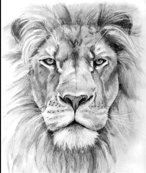 lion head drawing   clip art  clip