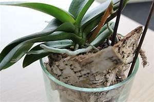 Luftwurzeln Bei Orchideen : orchideen umtopfen wann welches substrat und wie wir kl ren auf ~ Frokenaadalensverden.com Haus und Dekorationen