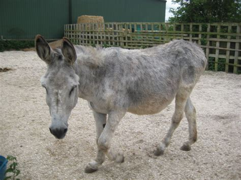 donkey andalusian spalding pets4homes horses ago years classifieds